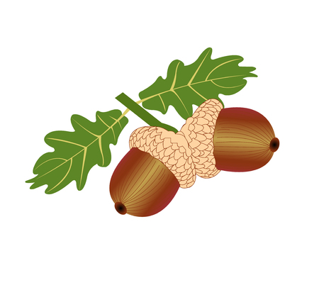 Two acorns and two leaves