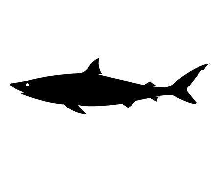 Shark black silhouette isolated on white background Archivio Fotografico - 120071734