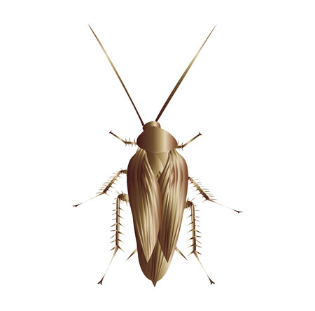 Cockroach on white background 스톡 콘텐츠 - 121669680