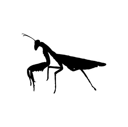 Black mantis silhouette isolated on white background Vectores