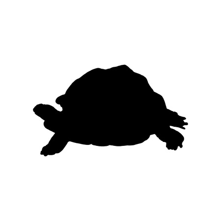 Black turtle silhouette isolated on white background