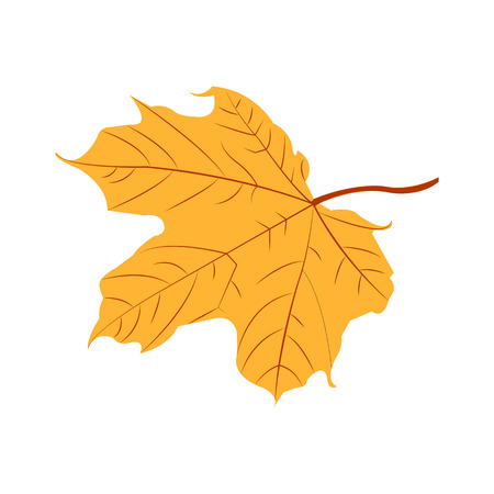 Yellow autumn maple leaf on white background