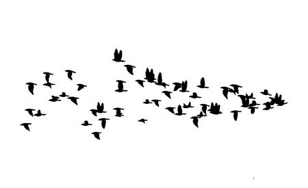 Bandada de pájaros sobre fondo blanco