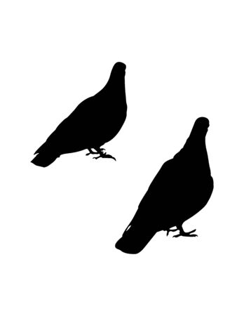 two pigeon silhouettes on white