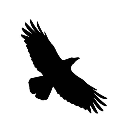 eagle flying with spread wings silhouette on white Vector Illustration