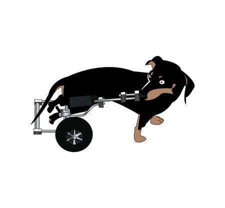 dog in wheelchair on white