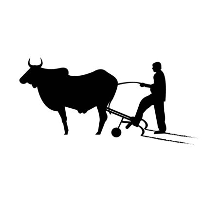 man with cow ploughing on white