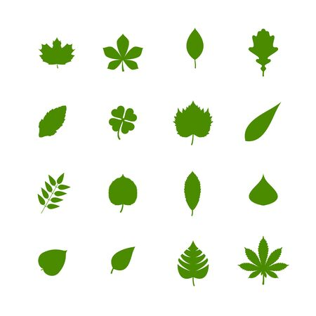 set of green leaves isolated