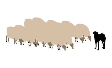 shepherd dog and a herd of sheep isolated