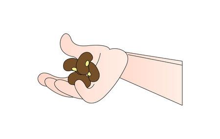 illustration of pea beans isolated on white background Ilustração