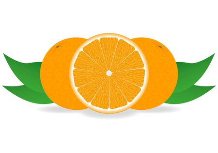 oranges  Stock Vector - 16599723