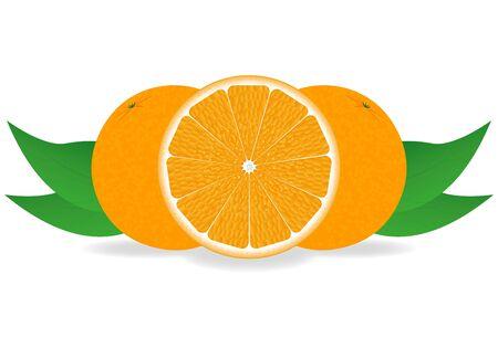oranges Stock Vector - 16599723