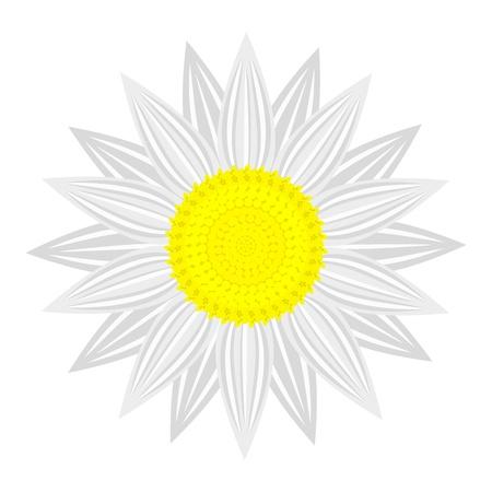 flower on white background Stock Vector - 19304939