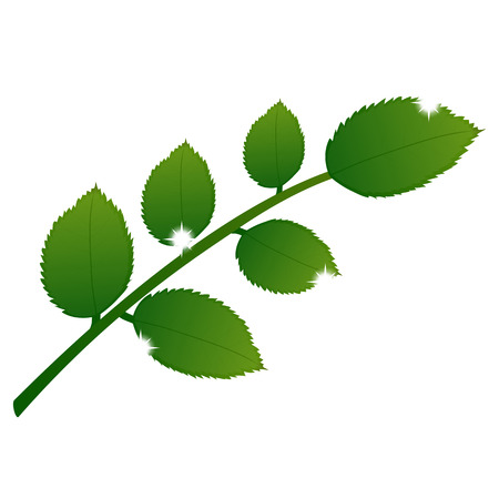 branch with leaves on a white background  イラスト・ベクター素材