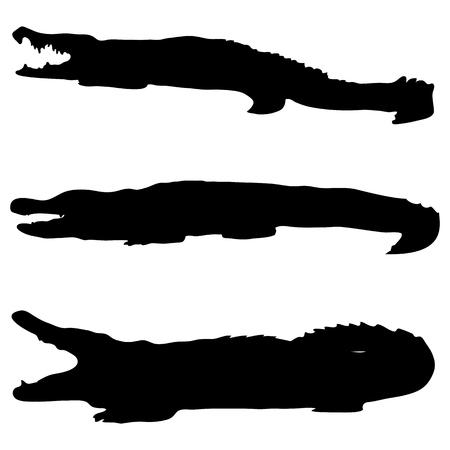 나일 강: Crocodile silhouettes on a white background 일러스트