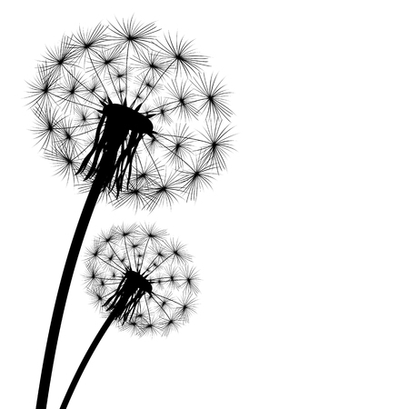 decode: black silhouette of a dandelion on a white background Illustration