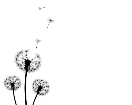 decode: background dandelion faded silhouettes on a white background Illustration