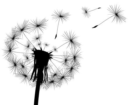 Silhouette mit Löwenzahn Knospen auf einem weißen Hintergrund fliegen