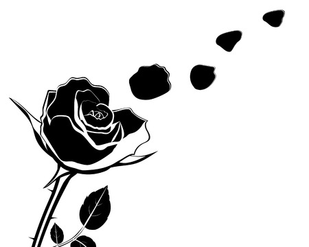 elegant white: silhouette of the flower with rose petals fly off vector illustration