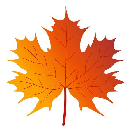 maple tree: Maple tree leaf on a white background. vector illustration