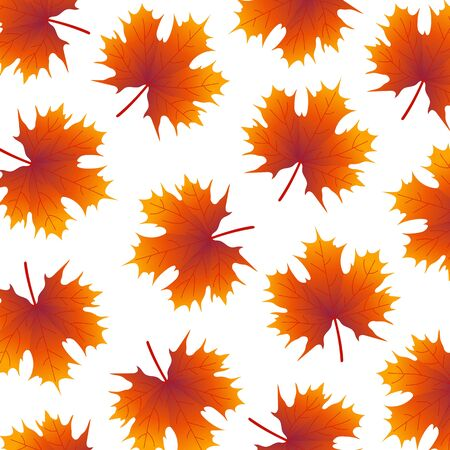 yellowed: Autumn yellowed maple leaf on a white background wallpaper