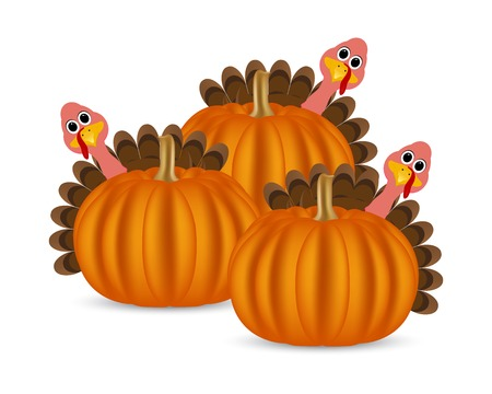Turkeys cartoon with pumpkins on the feast day of thanksgiving Illustration