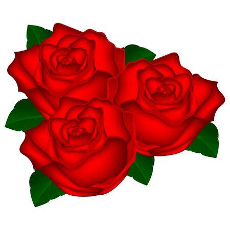 bouquet of red roses on a white background vector illustration o Ilustração