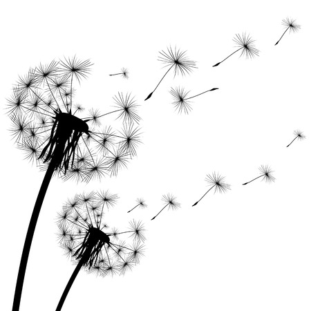 black silhouette of a dandelion on  white background Illustration
