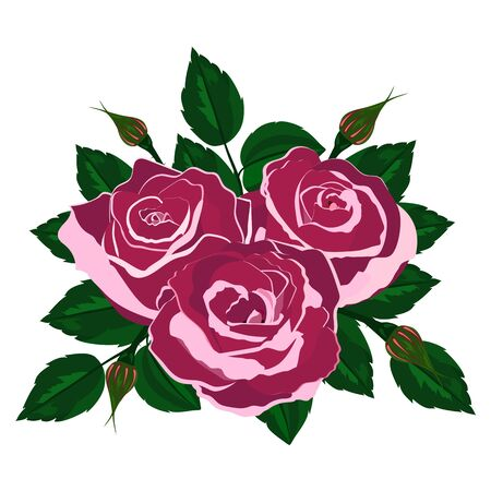 bouquet of pink roses on a white background Illustration