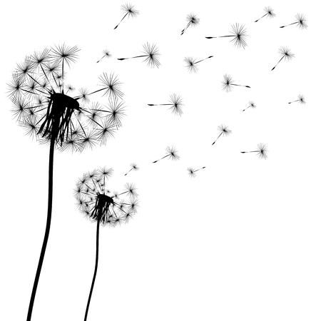 Silhouette of a dandelion