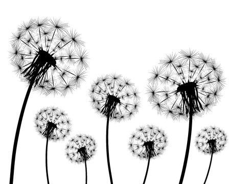 decode: Silhouette of a dandelion