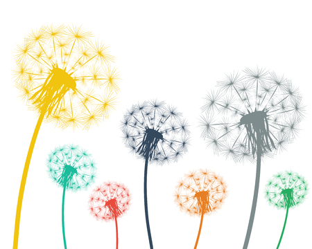 overblown: Multi-colored dandelions on a white background