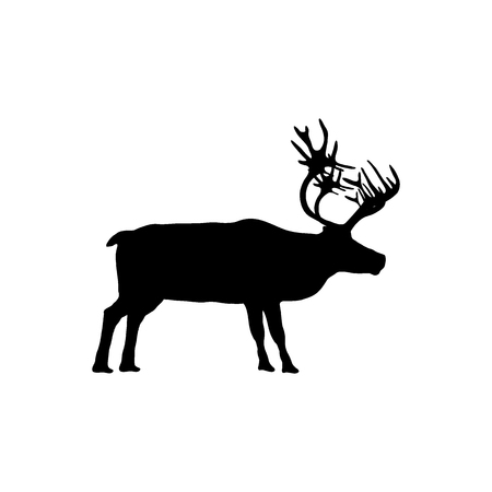 Reindeer isolated on white background Stock Photo