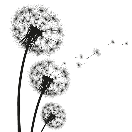 Silhouette of a dandelion on a white background Vettoriali