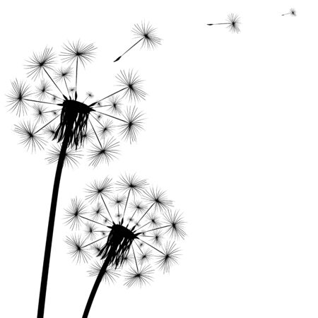 Black silhouette of a dandelion on a white background. Ilustrace