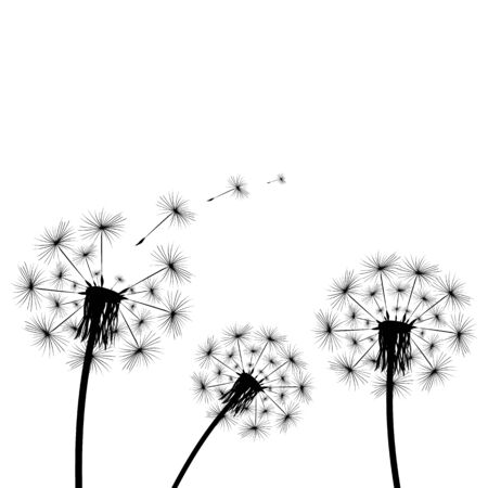 Dandelion flies off fluff isolated on white background