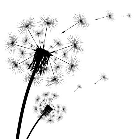 Black silhouette of a dandelion on a white background Ilustración de vector