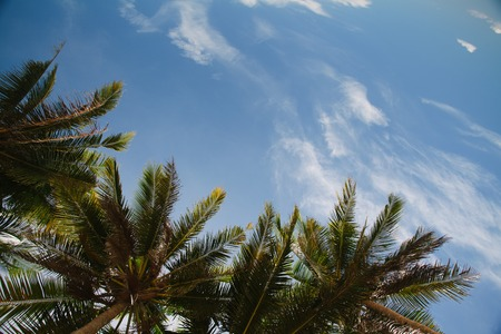 Beautiful view on the sky through palm trees 写真素材