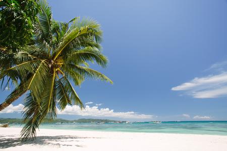 Beautiful view on the sky through palm trees Banco de Imagens