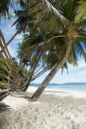 Beautiful beach view with palms