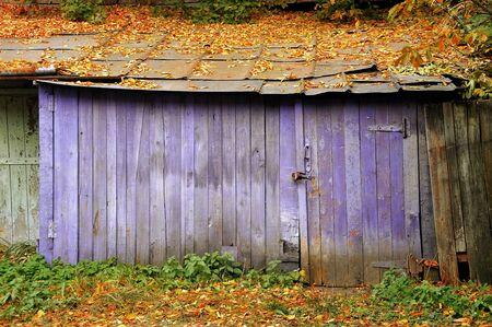 hojas antiguas: Antiguo granero de color p�rpura con las hojas ca�das en el tejado