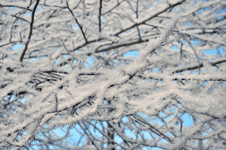 melancholy: Winter branch with frost background Stock Photo
