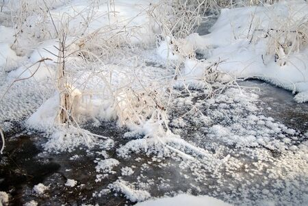 brook: frozen brook with plants in frost