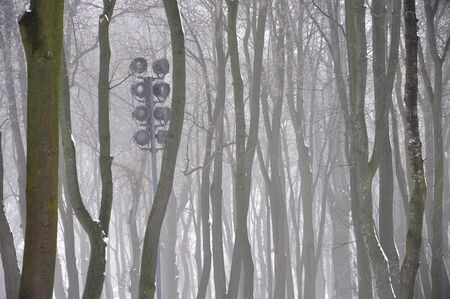 idyll: mysterious silhouettes of trees in the fog in winter park