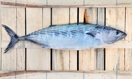 commercial fishing net: Palamita, fresh fish catching in Mediterranean Sea
