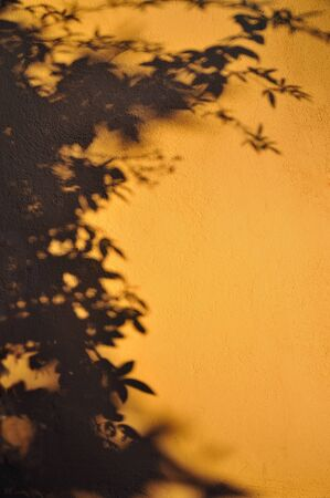 masterly: Shadows on the wall