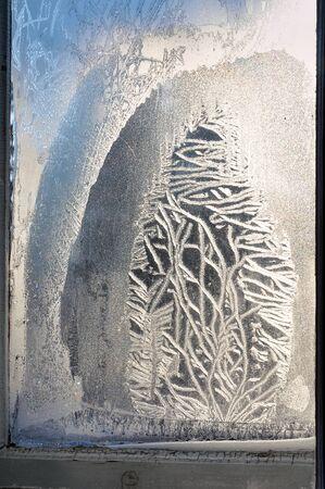 pane: Christmas tree frost-pattern on the window pane