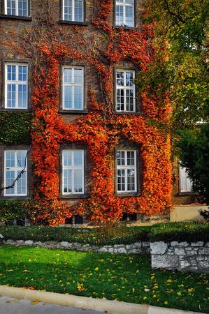 facade: autumn facade