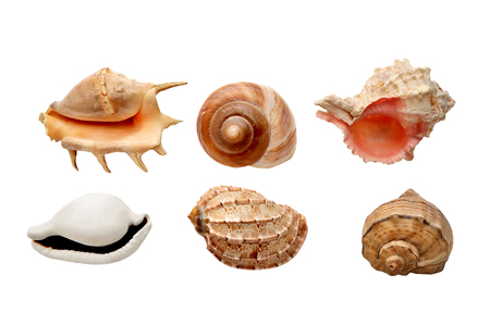 conchiglie di mare isolati su uno sfondo bianco nella composizione piatto