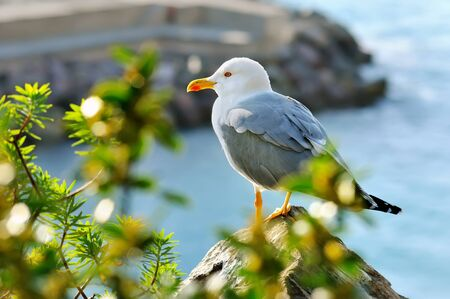 sits: adult seagull sits on the rock with green bushes